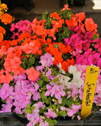 flowers and herbs perfect for a balcony garden newly swissed