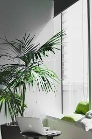 the eco bit with eco office plants
