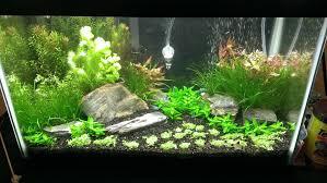 10 gallon planted tank led lighting 10 gallon planted aquarium very first shot 10 18 2013 planted
