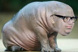 Baby Hippo Meme - after minutes in photoshop i give you the genetic product of danny
