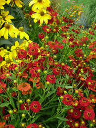 the flowers of summer at late summer flowers gardener s supply
