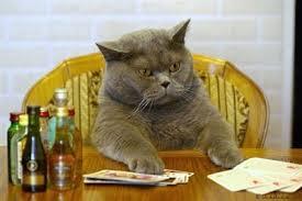 Cat Memes Generator - download cat meme generator super grove