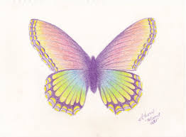 pencil drawing of a butterfly butterfly colourful butterfly