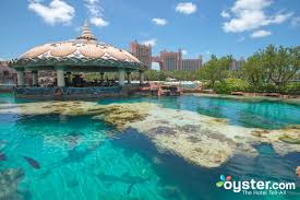 17 restaurants and bars photos at atlantis coral towers