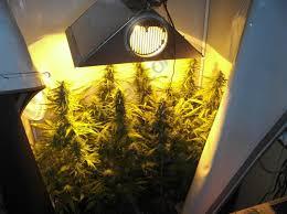 chambre de culture fait maison comment cultiver du cannabis en espaces réduits du growshop
