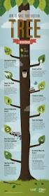 how to make your backyard tree mendous leaffilter