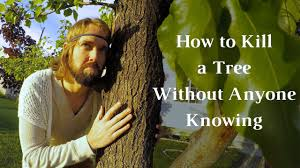 how to kill a tree without anyone knowing how to kill a tree