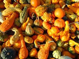gourds types of gourds growing gourds curing gourds