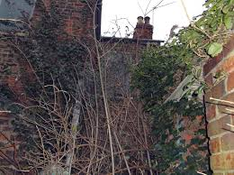 Overgrown Garden York Homeowner Prosecuted For Letting His Property Become A