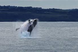 winter whale cruise wildlife coast cruises