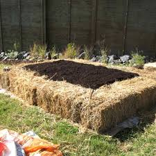 Raised Bed Vegetable Garden Design by Raised Vegetable Garden Plans Design The Garden Inspirations