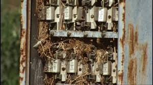 house sparrow nest electrical box greece hd stock video