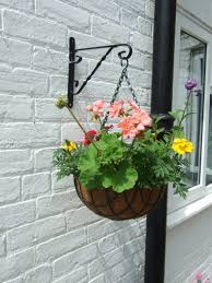 hanging flowers hanging basket plants best flowers for hanging baskets