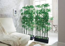 Bamboo Room Divider 15 Natural Plant Wall Ideas For Room Dividers House Design And Decor
