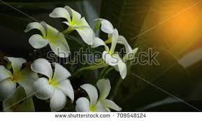 beautiful flowers garden stock images royalty free images