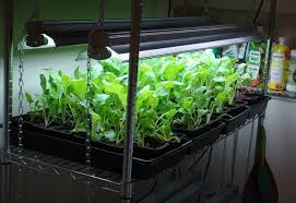 Indoor Gardening Ideas The Ultimate Indoor Vegetable Gardening Guide Survivalist