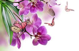 butterflies violet orchid flowers
