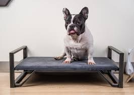 repulsif chien pour canapé canape pour chien lit pour petit chien tiny animaloo