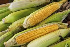 is corn a bad food to eat with diabetes livestrong com