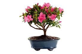 45 Diy Mother U0027s Day Gifts U0026 Crafts Best Homemade Mother U0027s Day 100 Mother S Day 2017 Flowers Mother Day Flowers Little