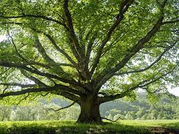 tree symbolism the meaning and symbolism of the word tree