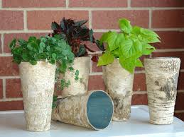 Birch Bark Vases Flower Pot Liners Sheilahight Decorations