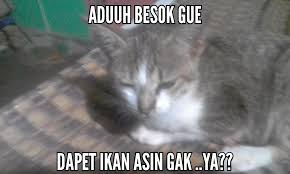 Meme Kucing - meme kucing steemit
