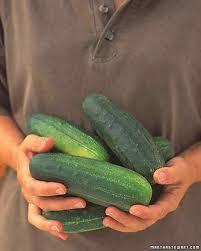 vegetable growing guide martha stewart