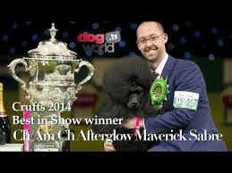 crufts australian shepherd 2014 43 best crufts supreme champions images on pinterest dog breeds