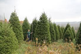 jb tree farm