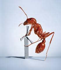 in the studio an ant and a tiny wind turbine u2013 proof