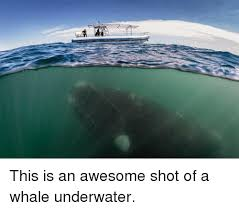 Whaling Meme - 25 best memes about whaling whales memes and whaling