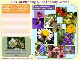 plants for native bees gardening for bees