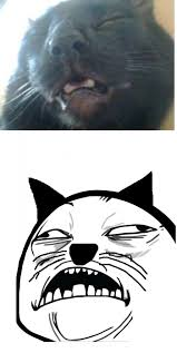 Sweet Jesus Meme - sweet cat meme sweet jesus cat is amused funny cat stuff