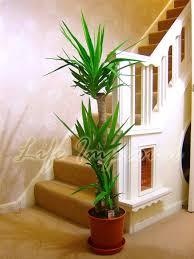 evergreen indoor plants pot plants cute interior and magnificent