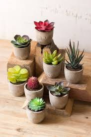 succelents set of 8 miniature succulents