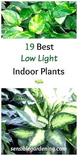 best indoor plants for low light indoor plants no light ubound co
