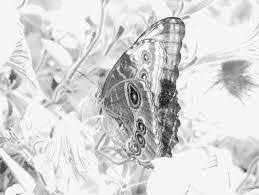 change digital photos black white pictures