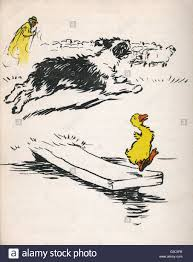 illustration by cecil aldin ugly duckling in the letter book