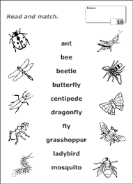 insects vocabulary for kids learning english printable resources