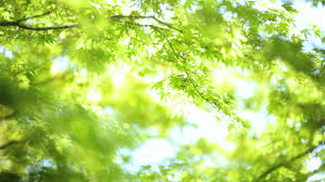 sapling in forest free stock footage