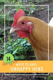 14 surefire ways to have unhappy hens city farming