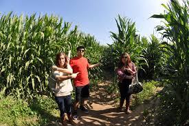 best corn mazes in the orange county area cbs los angeles
