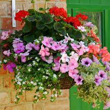 hanging baskets of flowers close x thank you bonza basket offer