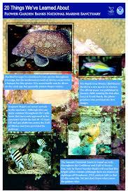 Image Flower Garden by Flower Garden Banks National Marine Sanctuary Research