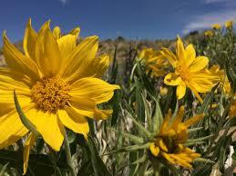 flowering native plants programs natural resources native plant communities about