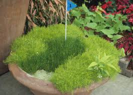 container gardening ideas decorating clear
