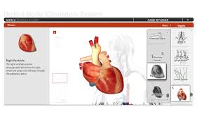 Human Anatomy And Physiology Case Studies Spongelab Build A Body