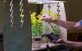 growing herbs indoors under lights start growing plants herbs indoors today led habitats