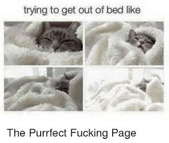Get Out Of Bed Meme - trying to get out of bed like the purrfect fucking page fucking